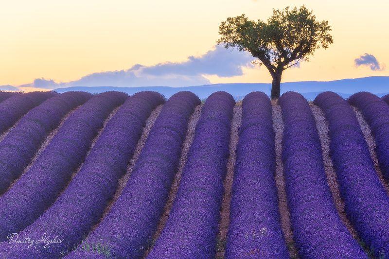 Прованс, лаванда, пейзаж, поля, природа, закат, франция, фототур запах свежей лавандыphoto preview