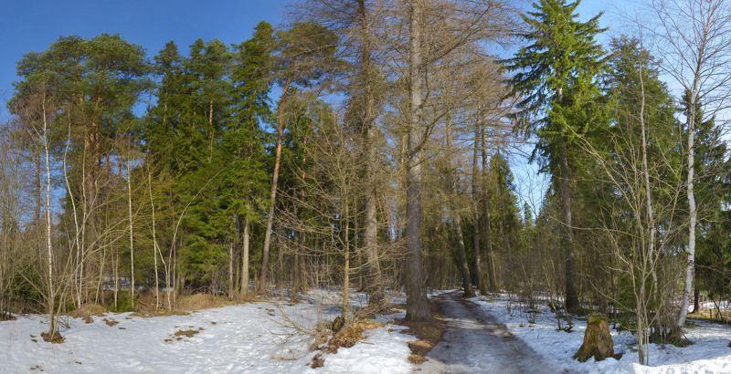 весна Весна на лесной опушкеphoto preview