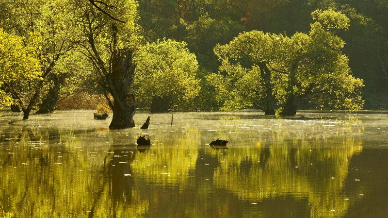 korea,autumn,reservoir,reflection,water,sunlight,backlight,morning,bud tree, Reflection of the morningphoto preview
