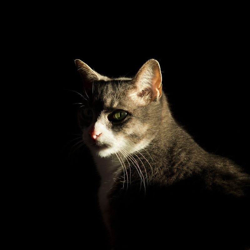 cat Cat Simaphoto preview