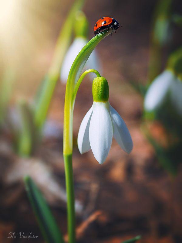 Первые краски весны !photo preview