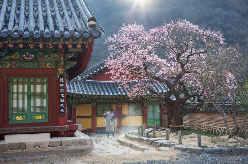 buddhism, working, culture, spring, blossom The scent of springphoto preview