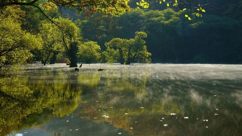 korea,autumn,reservoir,reflection,bud tree,fog,backlight, Water fog in the morningphoto preview