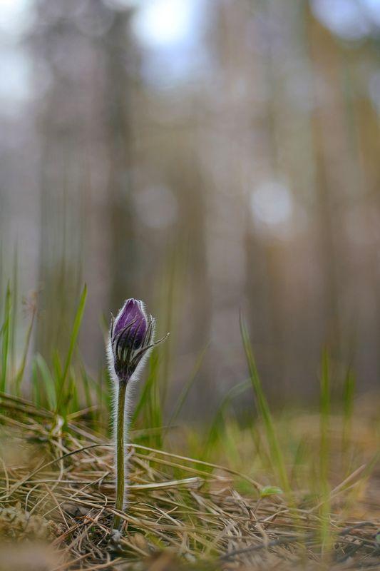 магия весныphoto preview