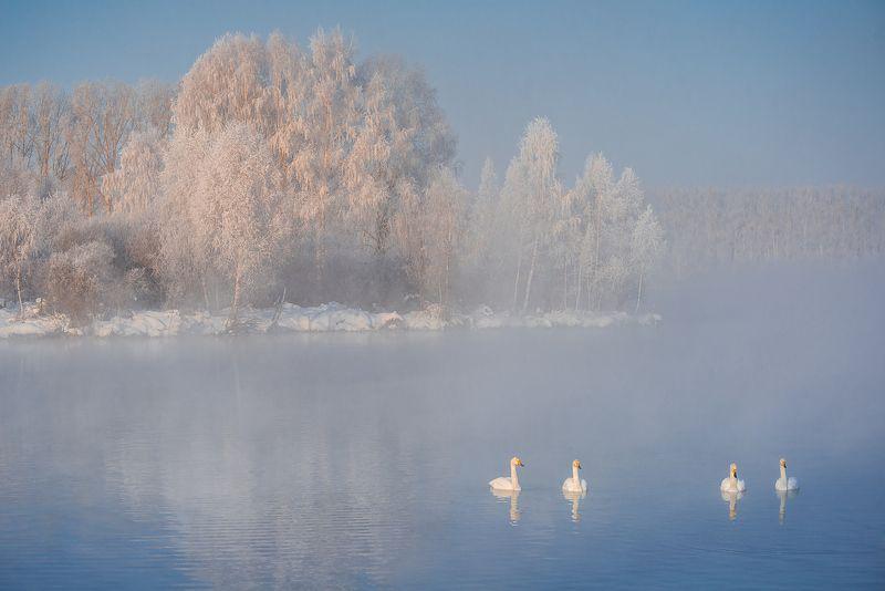 лебеди, зима Лебединое озероphoto preview