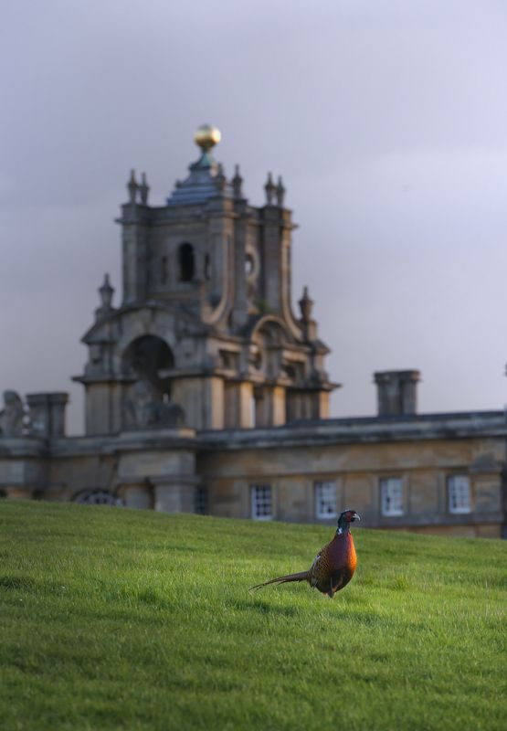 blenheim palace, landscape, pheasant, birds English Country Sidephoto preview