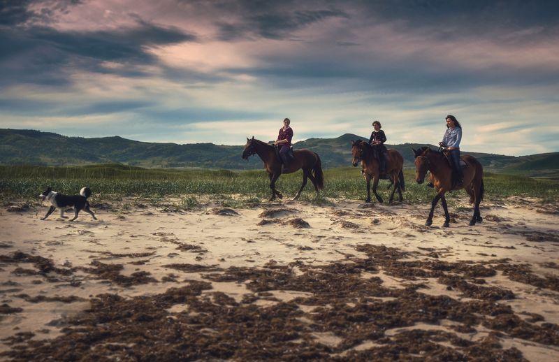 лето, кони, пляж На прогулке.photo preview