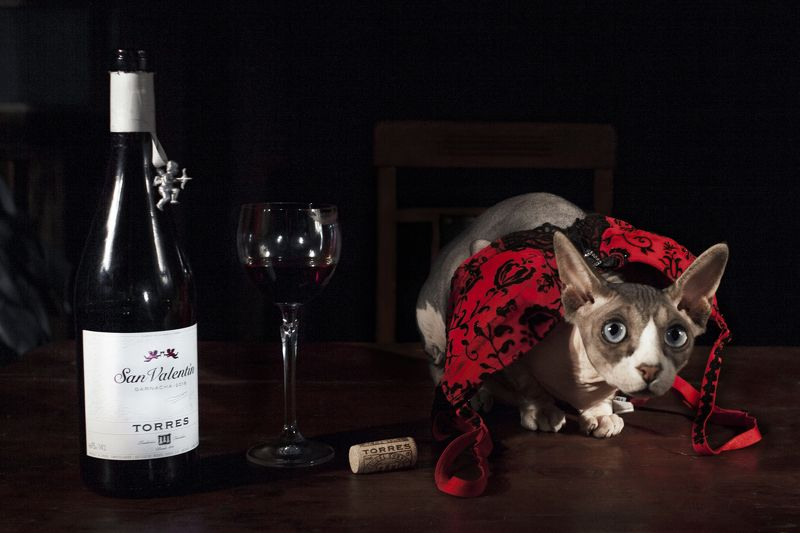 #love #kirillgolovan After wineglass of winephoto preview