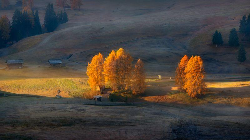 италия, утро, доломиты, деревья, пихты Под первыми лучами солнцаphoto preview