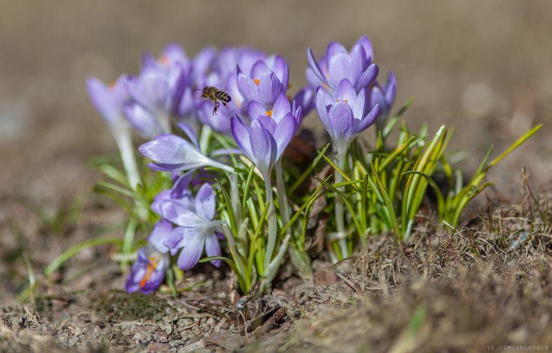 дикая природа, природа, лес, nature, wildlife, цветы, flower, wildlifephoto, весна, spring Весеннее настроениеphoto preview