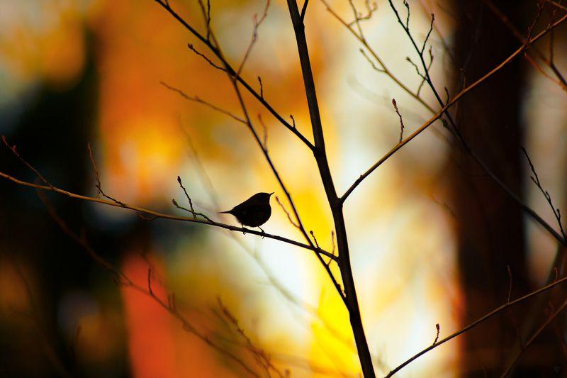 bird, wildlife, tree Lonely Leafphoto preview