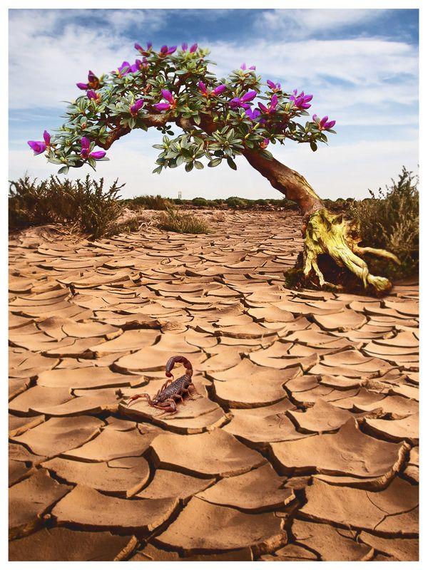 бонсай, пустыня, небо, скорпион ****photo preview