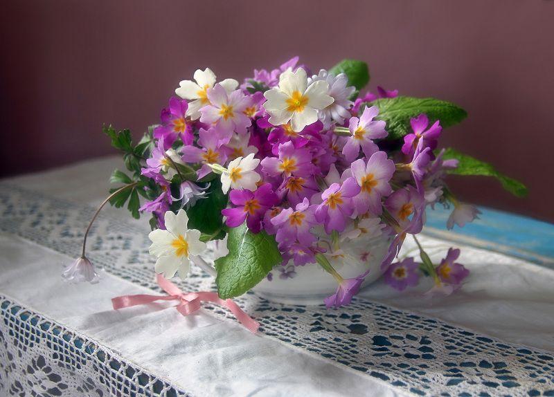 весна, цветы, первоцветы, натюрморт, марина филатова Примулыphoto preview