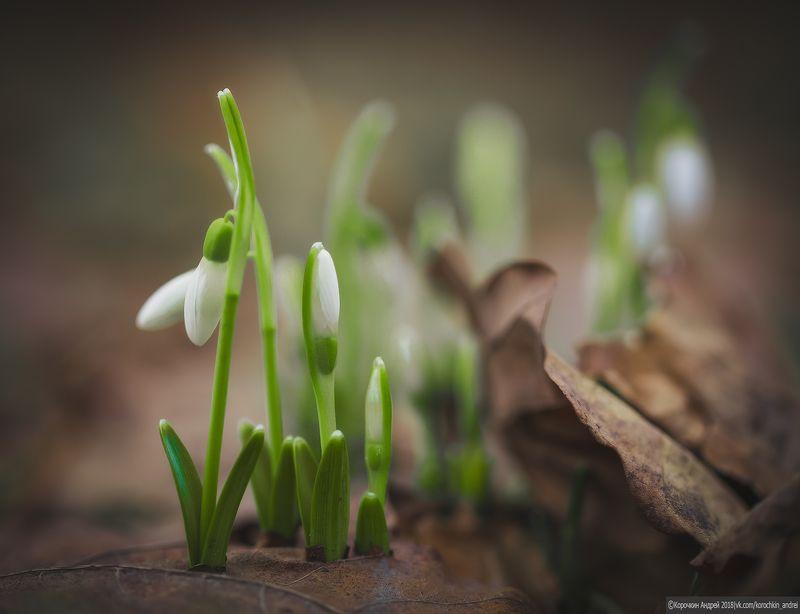 ... весна ...photo preview