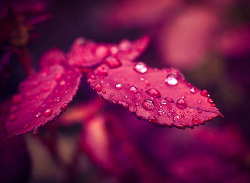 Дождевые каплиphoto preview