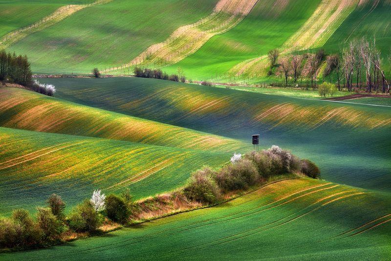 Morawskie dywanyphoto preview