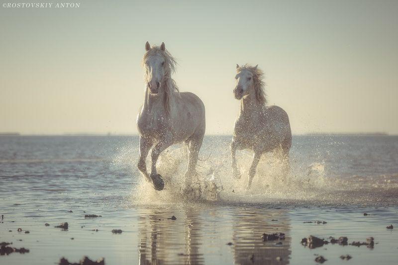 фототур в Камарг, фототур во Францию, фототур, фотопутешествие, лошади, кони, Камарг, Камаргские жеребцыphoto preview