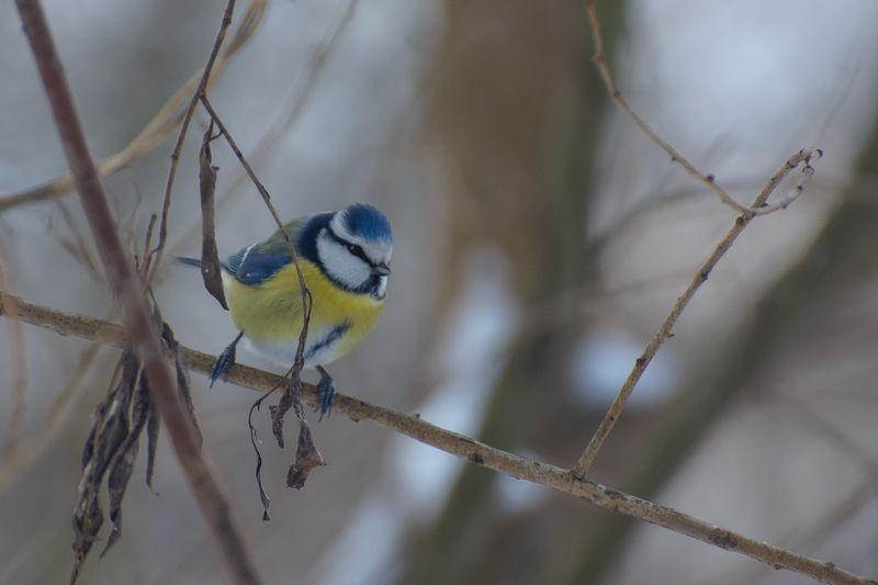 Зимние зарисовки (птички)photo preview