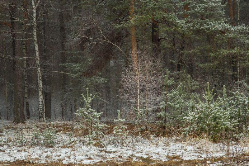 опушка лес снег весна Припорошилоphoto preview