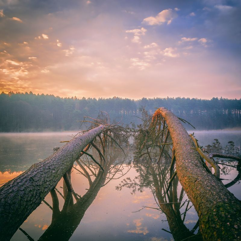 dawn,fog,trees,lake,nature,landscape,sky,clouds,sunlight,mirror, Hear the silencephoto preview