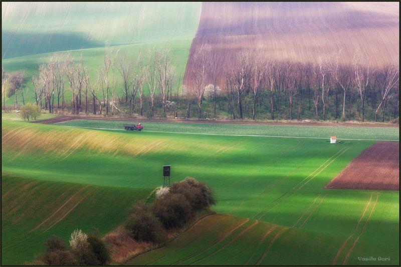 южная моравия,пейзаж,hils,грузовик,линии,south moravian,поле,lines,свет,czech,веснa,чехия,landscapes. Moravské Toskánsko.photo preview