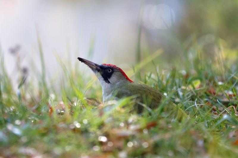 фотоохота,птицы,дятел,утка,сойка,зяблик,синица Фотоохота ...photo preview
