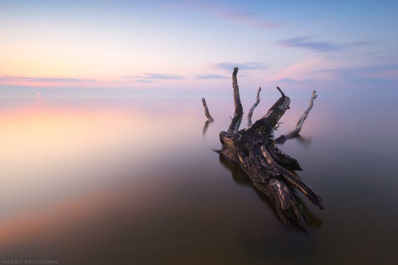 Тихий берег Куршского залива на рассвете.photo preview