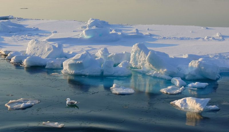 весна, охотское море, льдина, чайка, закатный свет льдинаphoto preview