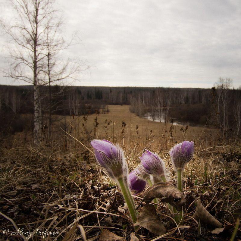 Первые весенние цветыphoto preview