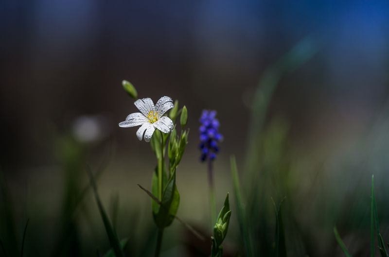 macro, nature, spring, scenery, flowers, close-up, цветы Цвъц! :)photo preview