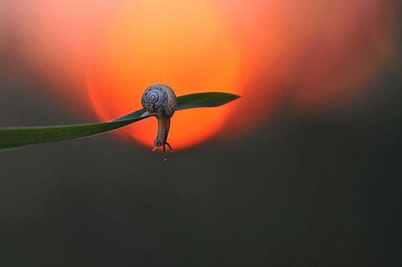 улитка, закат, природа Любитель закатаphoto preview