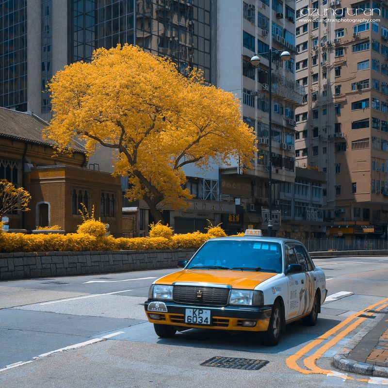 Taxiphoto preview