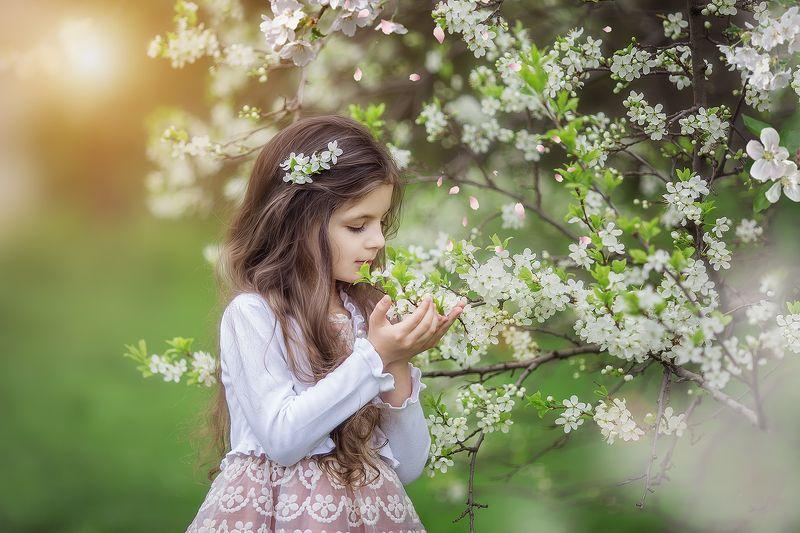 сады, черемуха, яблони, коломенское, москва, весна photo preview