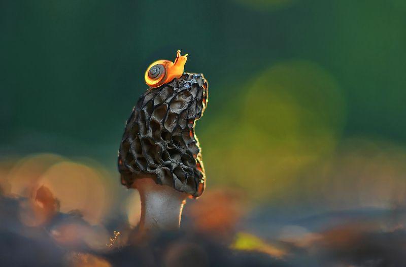 грибы, природа, улитка, весна, закат Провожая солнце...photo preview