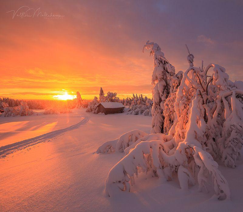 Зимнее солнце Лапландииphoto preview
