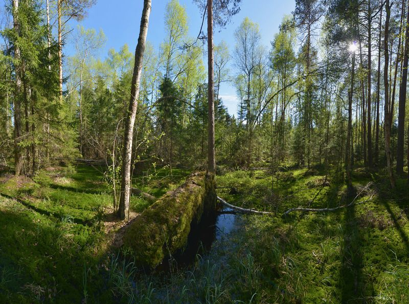 В весеннем лесуphoto preview