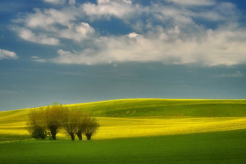 spring, fields, Malbork, Poland Spring fieldsphoto preview