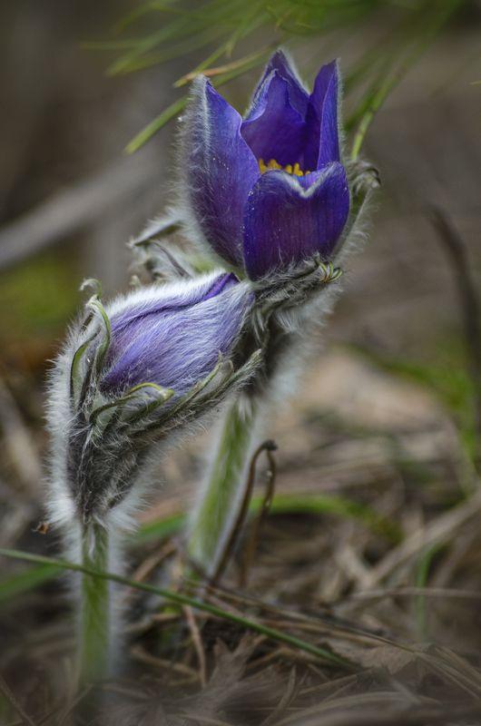 nevant60 пейзаж красота Апрельские  цветы \