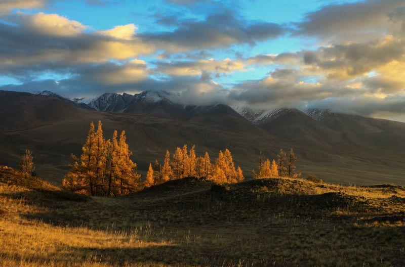 алтай, горный алтай, курай, осень Осенних лиственниц пожарphoto preview