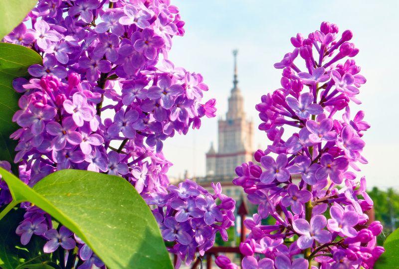 мгу Цветы Альма-матерphoto preview