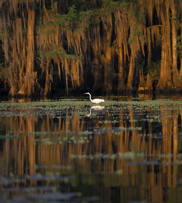 Swamp Texas Swampphoto preview