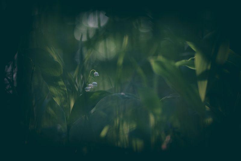 Вечер, охота на ландышphoto preview
