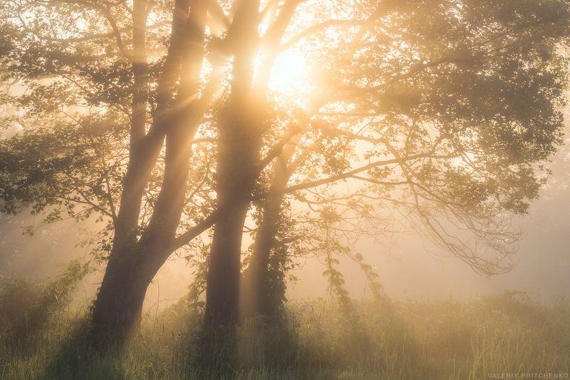 Прохладное утро теплой весны.photo preview