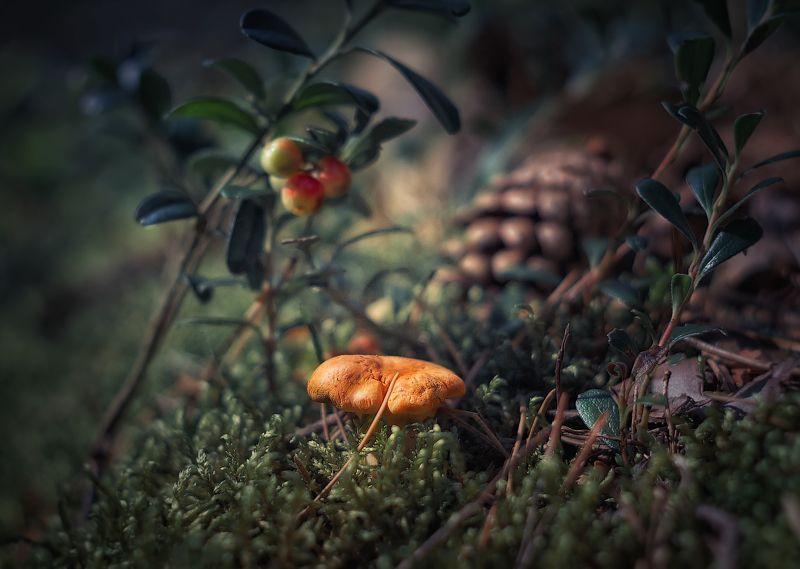 осень, лес, photo preview