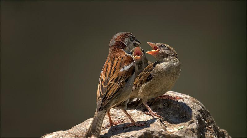 птицы. фауна. весна Обедphoto preview
