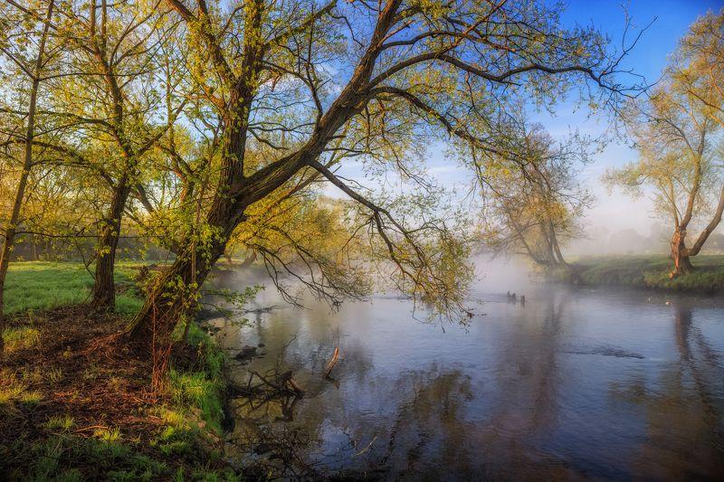 весна, дымка, река, утро, Утро весныphoto preview