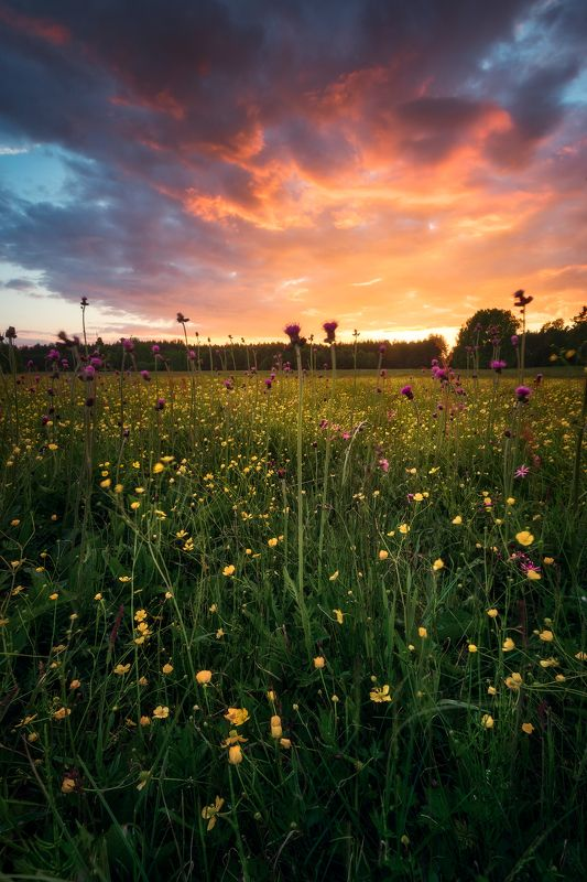 meadow spring wildflowers flowers sunset sky clouds colors mood poland podlasie May meadow sunset mix...photo preview