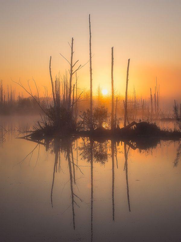 рассвет, восход, солнце, вода, озеро, отражения, деревья, золотой час, алферово Золотой рассветphoto preview