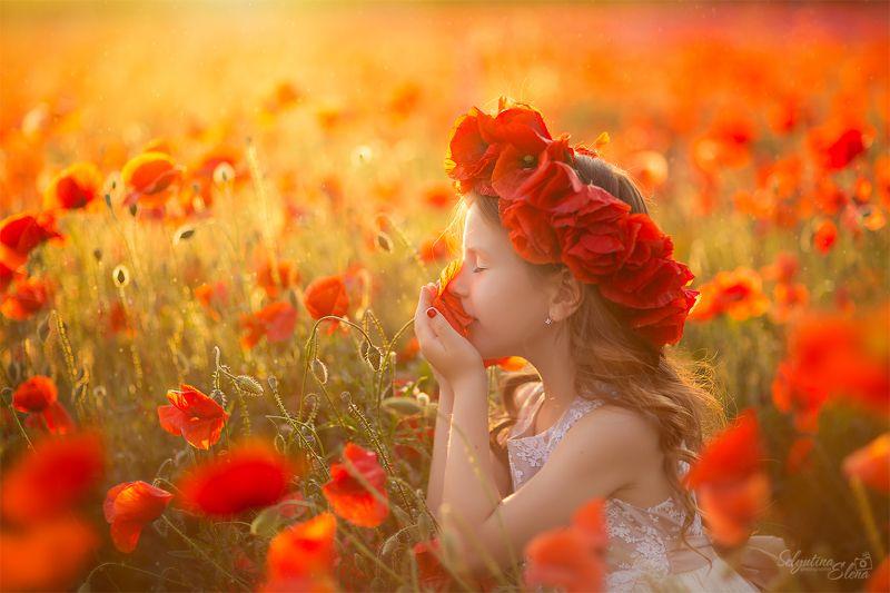 мак маки poppies poppies field маковое поле  Magic poppies / Волшебные маки photo preview