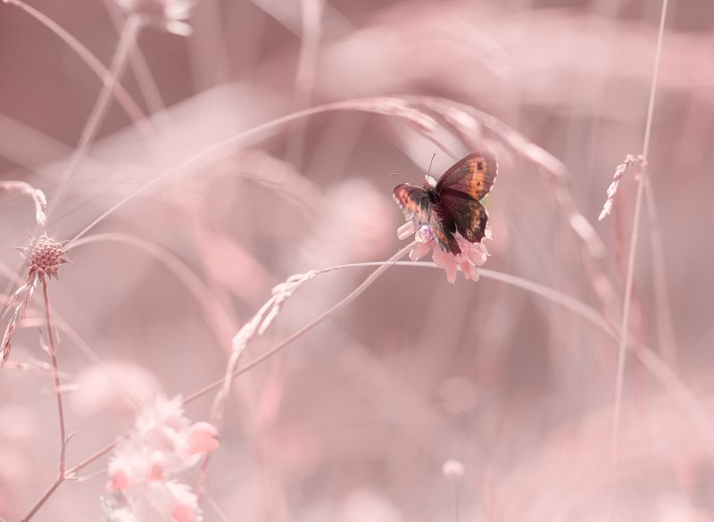 macro, butterfly, purity In the Kingdom of purityphoto preview